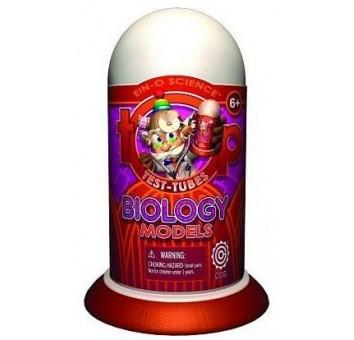БИОЛОГИЧЕСКАЯ МОДЕЛЬ (Biology Models)